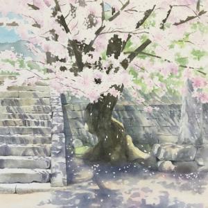 当麻寺の桜〜描き直しました!