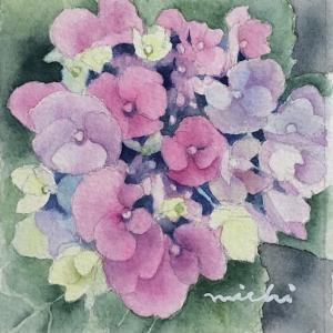 額紫陽花を描く〜♪