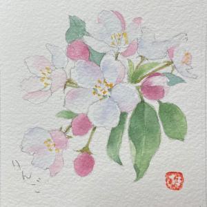 リンゴの花を描く〜♪