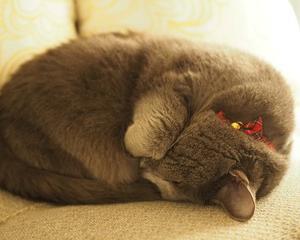 眠くて眠くて・・・