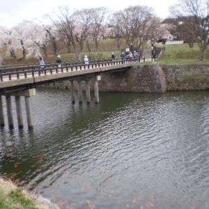 五稜郭公園裏門橋付近の写真