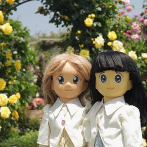 綺麗な薔薇が見たいので Soligor Miranda 50mmF2.8 @F5.6