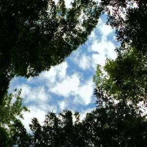 夏至の朝『うろこ雲』広がる 雲の変化想像力膨らむ