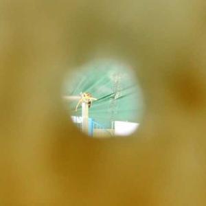 小さな穴の向こう広がる世界 カキ養殖の準備進む
