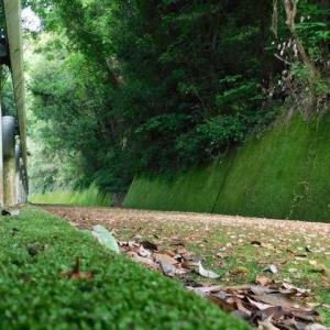 自然の造形緑のプロムナード 無機質な道路コケに包まれる