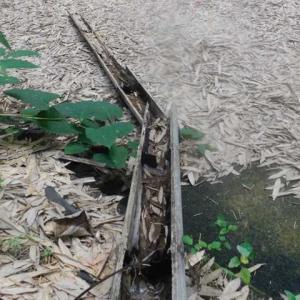 涼を求めた自然のイタズラ そうめん流しに笹の葉流れる
