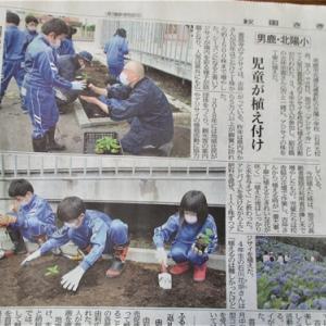 アジサイ植栽が新聞記事に。