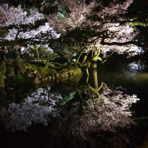 兼六園・金沢城「夜桜花見」