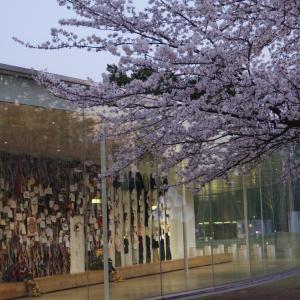 金澤の桜2020年未UP(夜桜編)