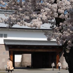 金澤の桜2020年未UP編(その3)