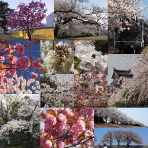 Instagramベスト9ふう、金澤桜百景2020年(その5)