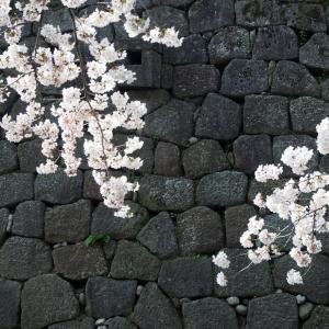 2019年桜開花予想