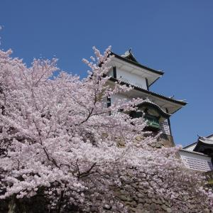 PENTAX K-3で桜「超満開の石川門」