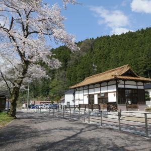 加賀一宮駅と桜