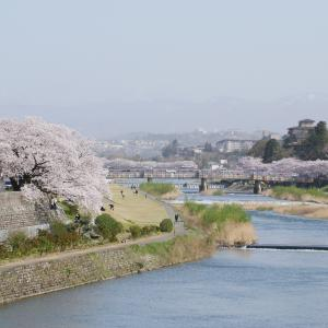 「金澤桜百景」蔵出し写真(その3)