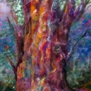 「暁の縄文杉」