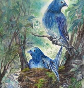 Blue Birds ? [抱卵]