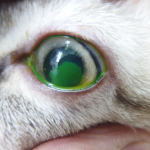 命には関わらないけれど ~眼の緊急疾患~
