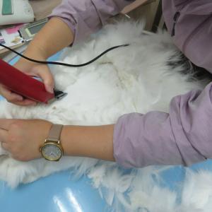 特別枠 ~とある手術と長毛猫~