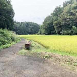 東京だけど「日本のふるさと」…町田の谷戸・1