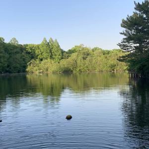 思いついたら会いに行ける「石神井・三宝寺池」