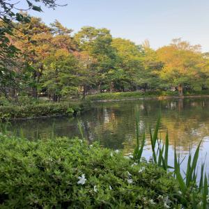 妙正寺池で「奇跡の一枚」