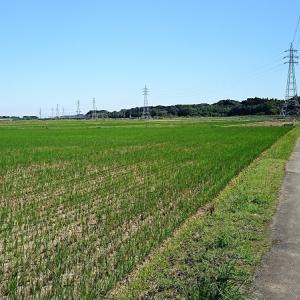 秋の農道マラニック