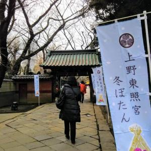 上野東照宮 ぼたん苑①