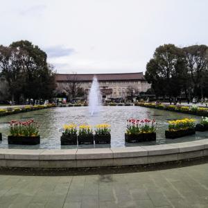 上野公園のチューリップ