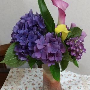 紫陽花とカラー
