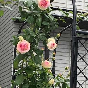 薔薇へのプレゼント