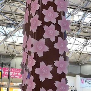 国分寺の桜、謎のまま?
