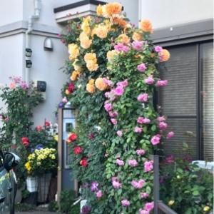 散歩で花をいただく