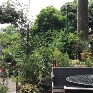 渋谷園芸で山野草