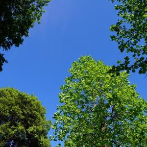 桜が丘公園へお散歩