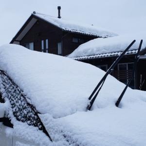 またまた大雪〓️
