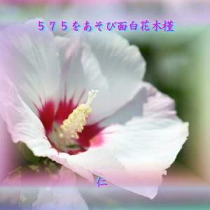 『 575をあそび面白花木槿 』TAO575交心yvp1207