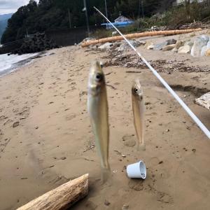 三重県は紀北町へ落ちギス釣りの旅