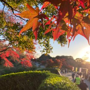 イチョウの絨毯や紅葉に癒されました♪〜昭和記念公園〜