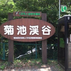 キツネノカミソリ観賞 (菊池渓谷)