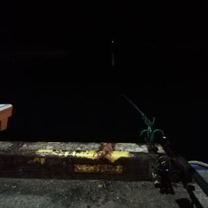 チカ、サビキ釣り r01.08.03