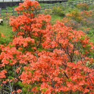 雨の季節の花