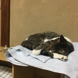 猫はどうして、洗濯したばかりだとわかるのか