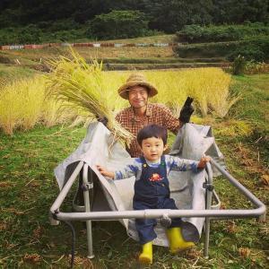 自然栽培によるmy田んぼの稲刈り始まる。