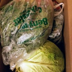 お野菜あれこれ。