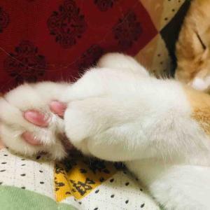 毛布大好きですから