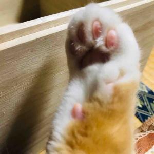 爪研ぎはベッドです!