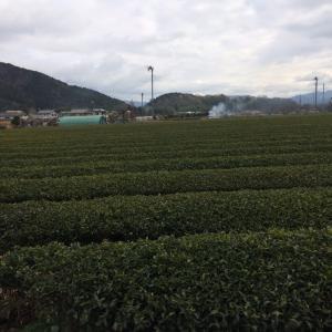 草だんごとお茶@諏訪園本店 丹波篠山