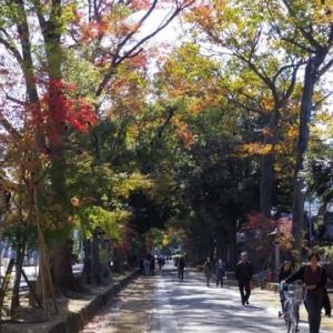 武蔵一宮 氷川神社(大嘗祭当日祭)