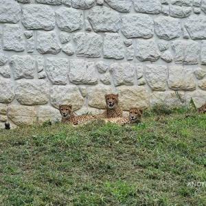 お転婆が過ぎます 9月中旬のデュラ親子 その9 多摩動物公園